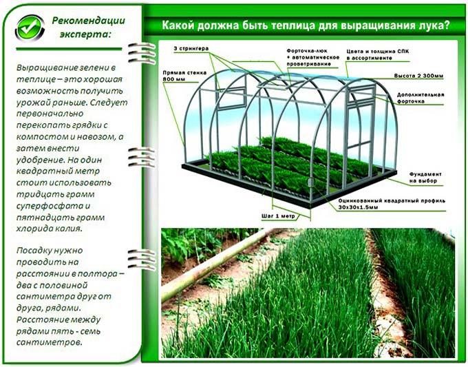 Теплица для выращивания лука