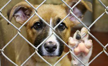Как открыть приют для бездомных животных