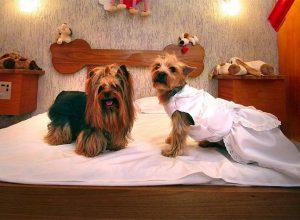 Как открыть гостиницу для домашних животных
