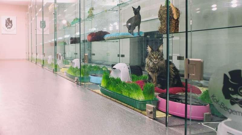 Идея № 364: гостиница для животных как бизнес
