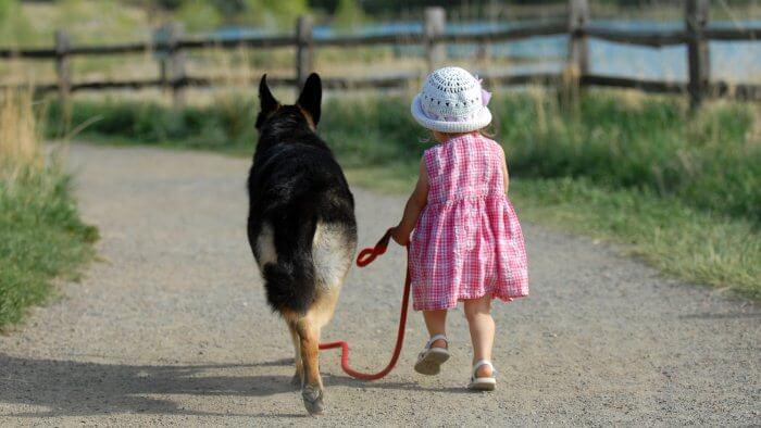 Сколько можно заработать и сколько стоит выгул собак