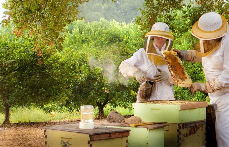 Насколько выгодно заниматься содержанием пчел и производством меда