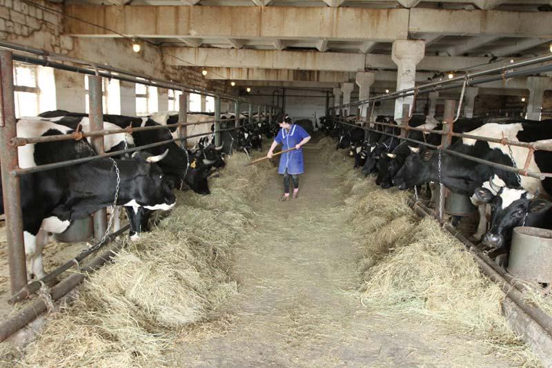 Изображение - Разведение коров как бизнес soderzhanie-krs