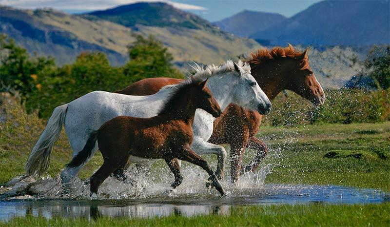 Бизнес план как открыть ферму по разведению лошадей