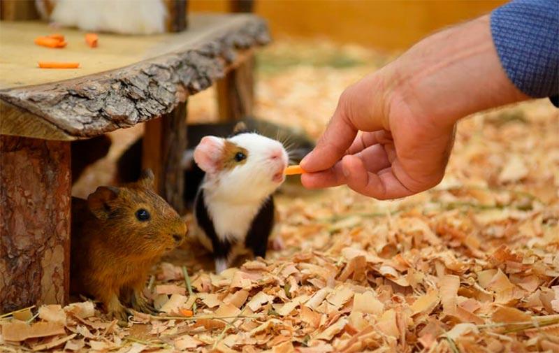 Изображение - Как открыть контактный зоопарк kormlenie