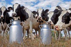 Молочная ферма как бизнес