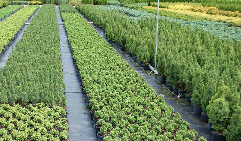 Сельскохозяйственный бизнес выращивание плодовых культур