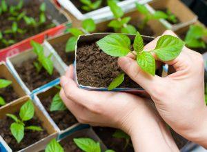 Бизнес на рассаде овощей и цветов
