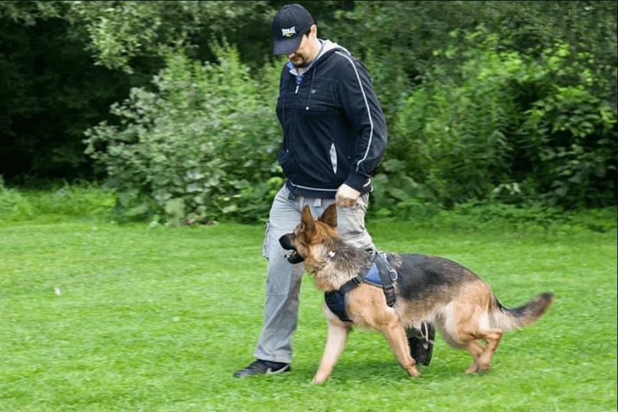 Бизнес на дрессировке собак