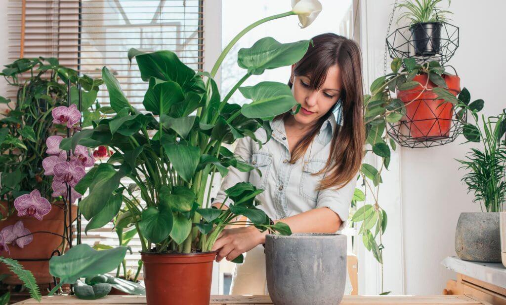 Выращивание комнатных растений как бизнес